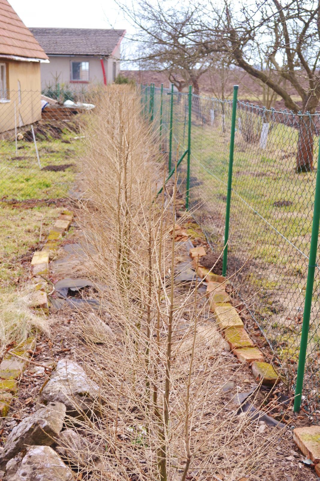 Naše chaloupka a zahrádka - ualááááá a plot po 2 letech 160 cm vysoký