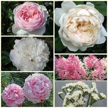 vybrané květiny do svatební kytice :-)