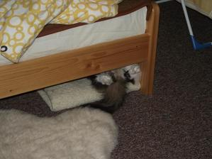 v bezpečí pod posteľou