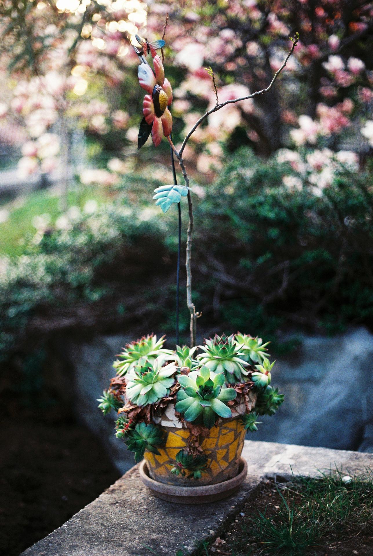 Zahrada u rodičů - Obrázek č. 4