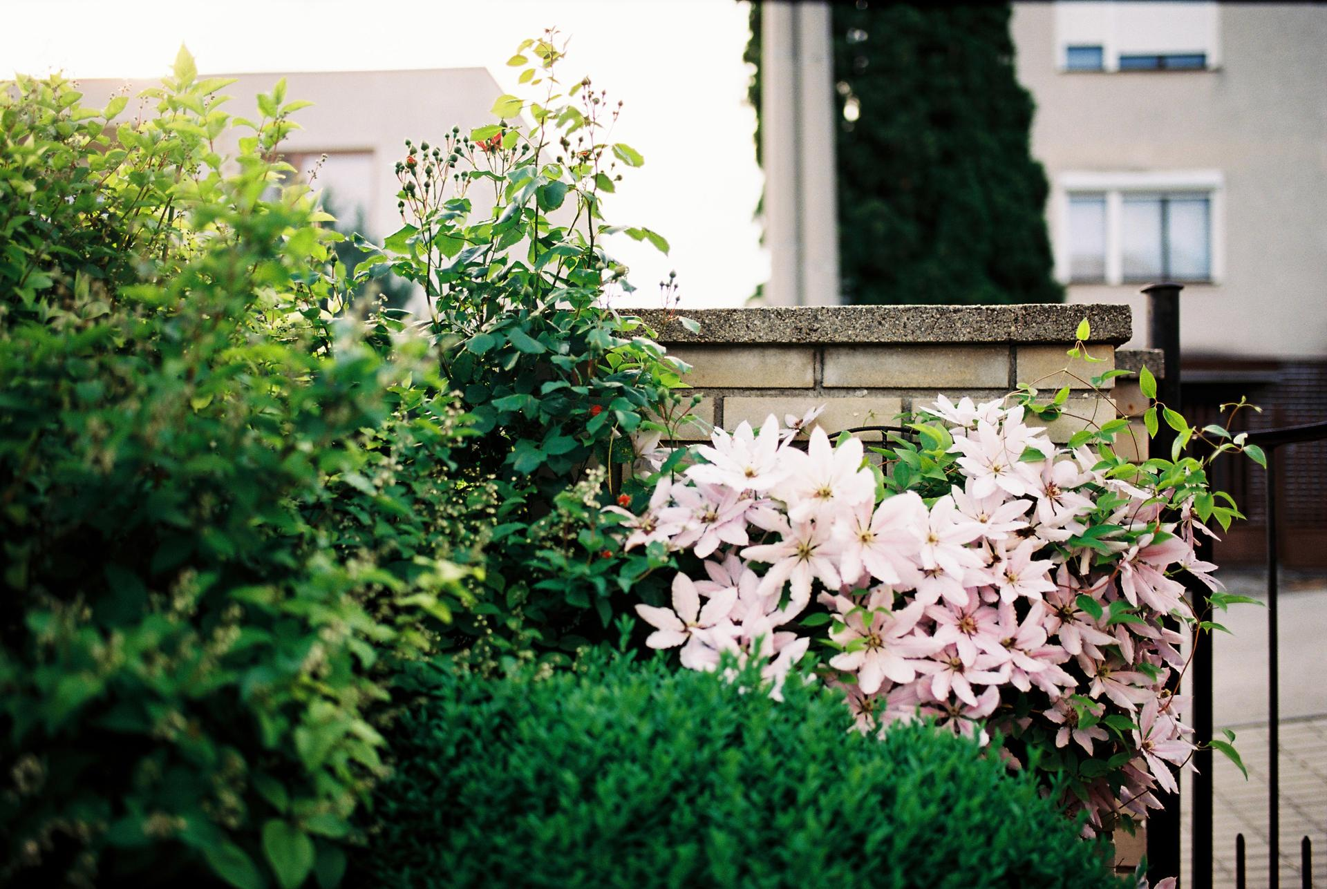 Zahrada u rodičů - Obrázek č. 17