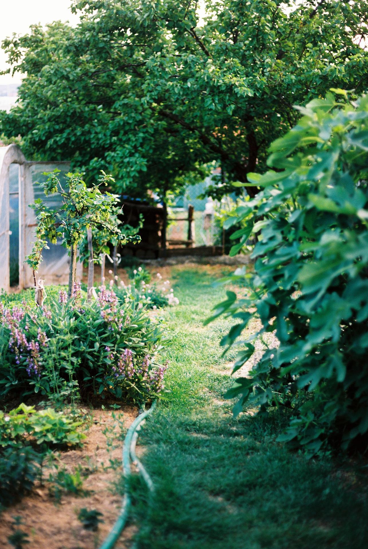 Zahrada u rodičů - Obrázek č. 20