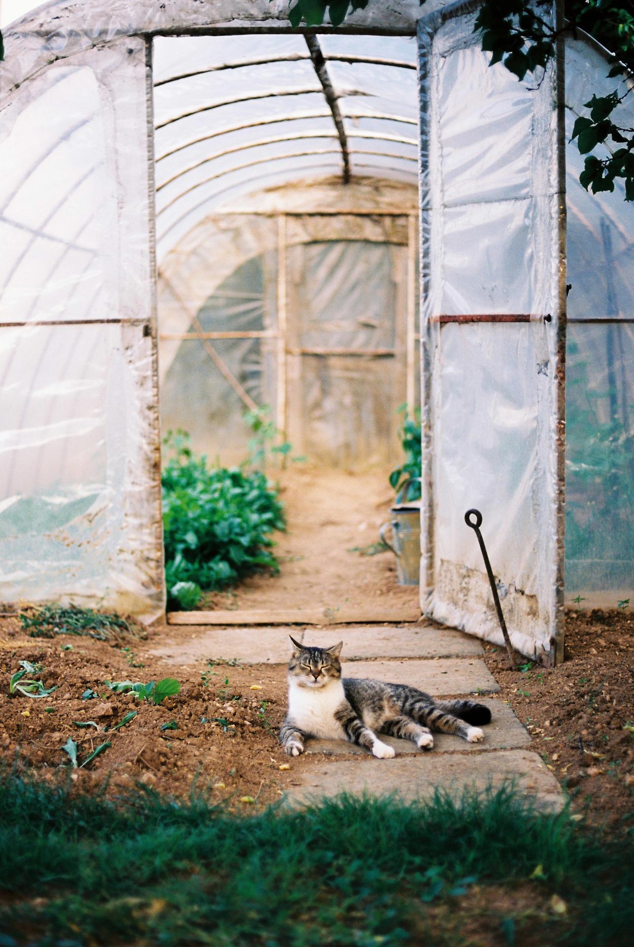 Zahrada u rodičů - Obrázek č. 24