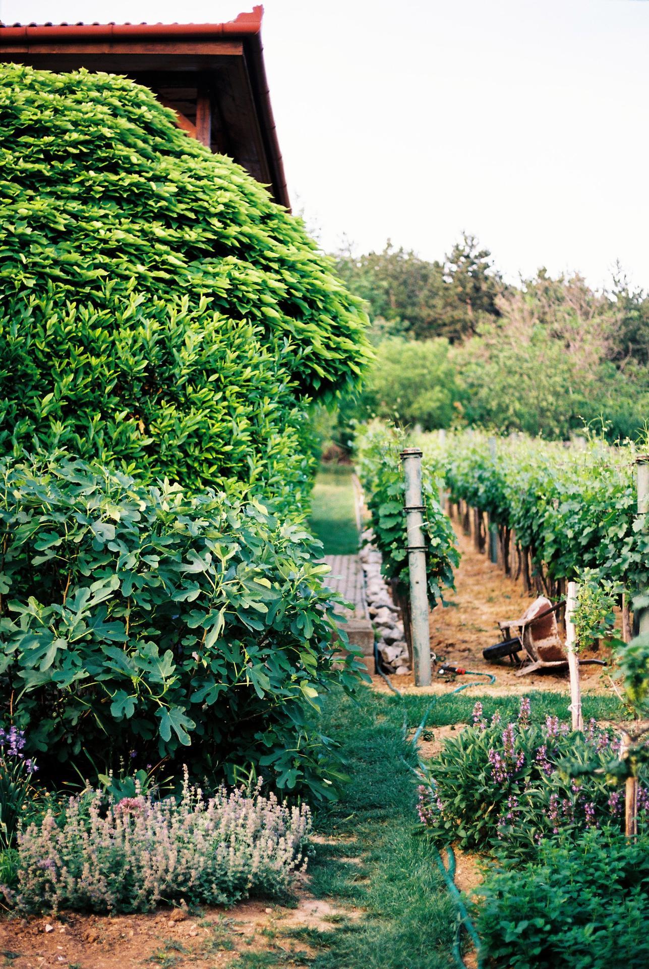 Zahrada u rodičů - Obrázek č. 33