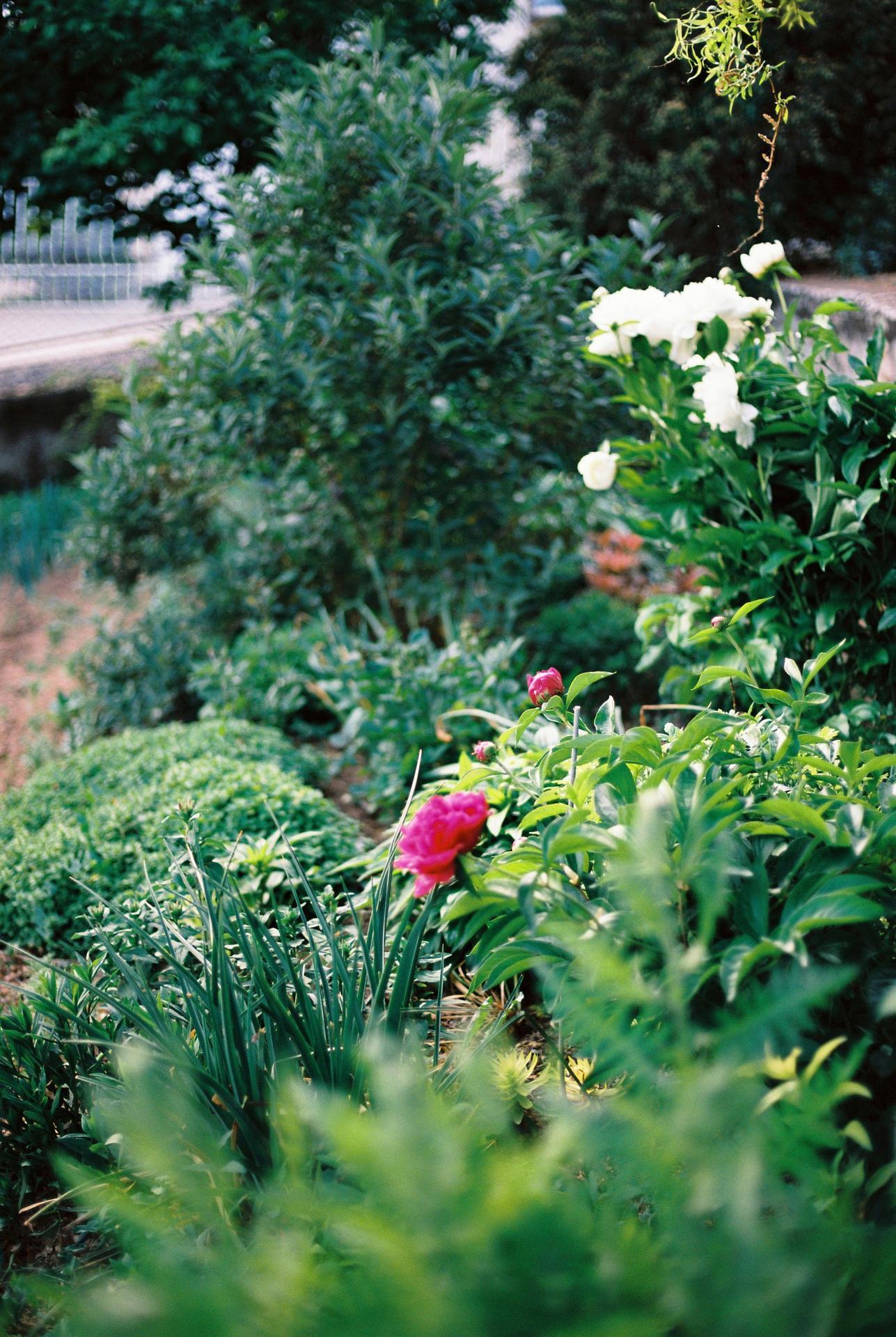 Zahrada u rodičů - Obrázek č. 32