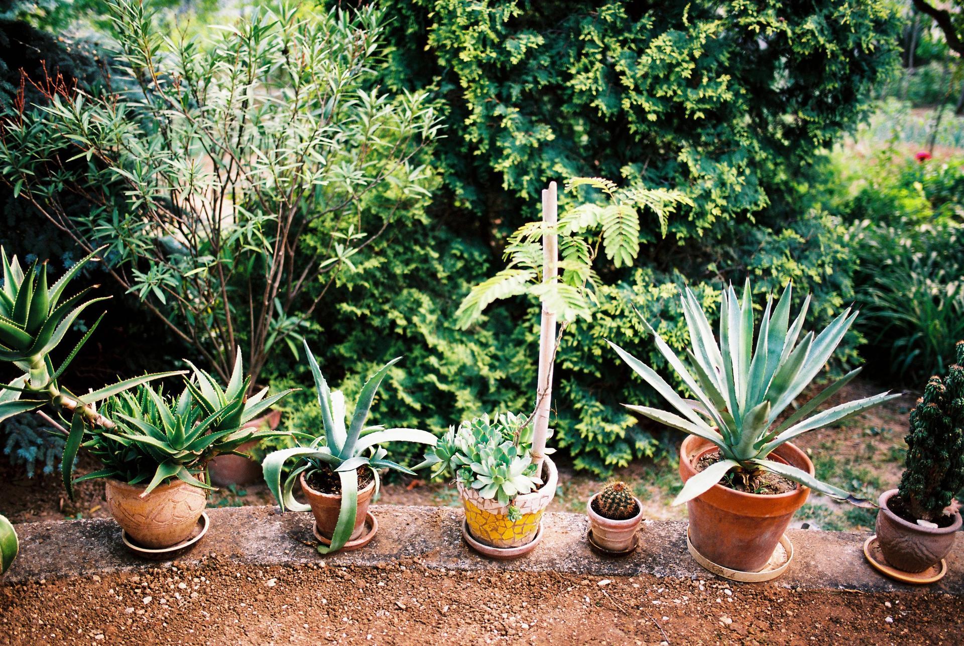 Zahrada u rodičů - Obrázek č. 22