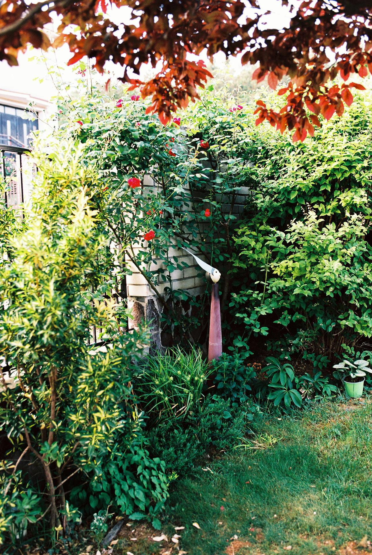 Zahrada u rodičů - Obrázek č. 42