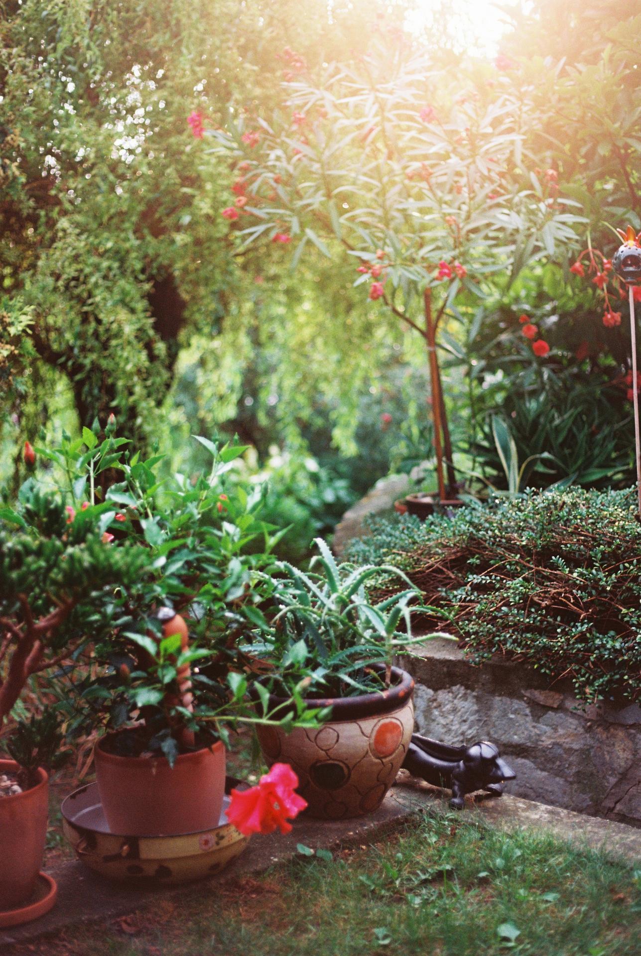Zahrada u rodičů - Obrázek č. 50