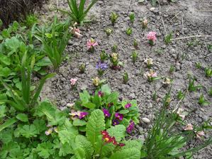 11.4. hyacinty