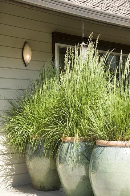Zahrada - citronova trava ako repelent