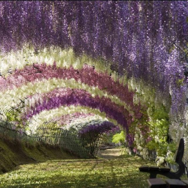 Zahrada - visteria