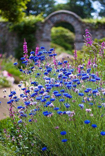 Zahrada - nevadza