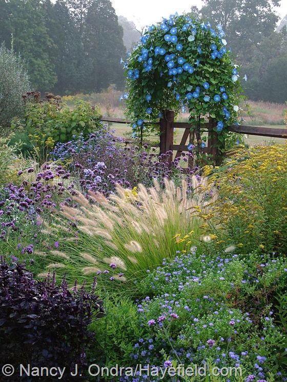 Zahrada - Obrázok č. 71