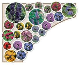 """Butterfly Garden, Zone 5-8, 13 varieties, 24 plants. Layout for 9'x11' corner included. Height: 12""""-6', Blooms Early Summer to Fall. Full Sun to Mostly Sunny. Phlox Sherwood Purple 3,E Caryopteris Longwood Blue 1, H Echinacea Purpurea 3, K Origanum"""