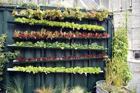 DIY záhrada - Obrázok č. 1