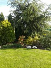toto je naše záhradné zákutie s cedrom. Je už gigantický.