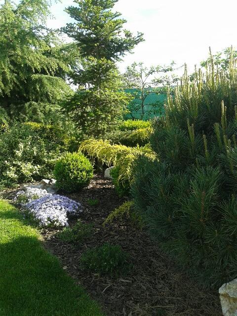 Záhrada - Obrázok č. 4