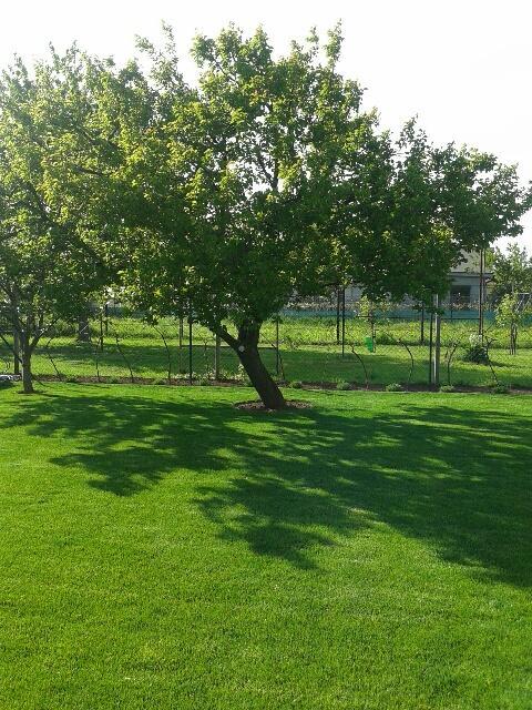 Záhrada - tu vidieť vinič, ktorý nám v čase olistenia robí bariéru od suseda. Je to samorodák, ktorý nestriekame. Pod neho som posadila levandulu. Minulý rok boli iba malé sadenice, ktoré nekvitli. Tento rok už snáď zakvitne.-)