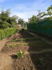 """A toto je moja mini úžitková záhradka. Nebudem riešiť vyvýšené záhony. Urobila som """"spevnené plochy"""" po ktorých sa dá chodiť aj po daždi bez ujmy. Na pravo je kordón z jabloní a hrušky. Kompostér sme urobili home made - zvyšok pletiva a trstina."""