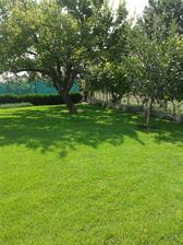 tu máme zelenú stenu od susedov - vinič, ktorý je rozrastený a v dolnej časti levanduľa