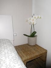 Orchidejka od kamarádky našla své místo.