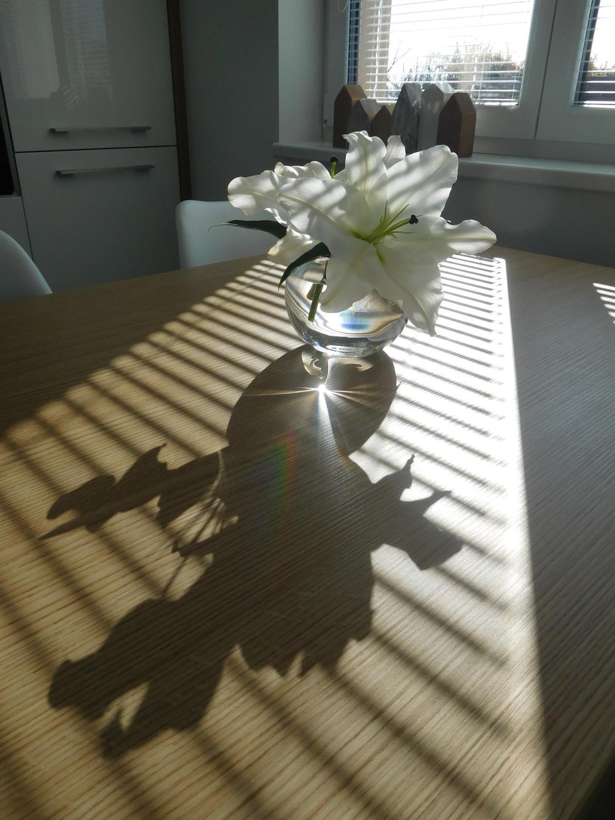 Náš nový domov - Dnešní ranní sluníčko svítilo nádherně!
