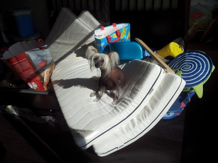 Zariadujeme náš druhý bytík - moja pomocníčka:-)
