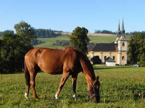 tak tady se budem brát, ale toho koně nezvem :-)