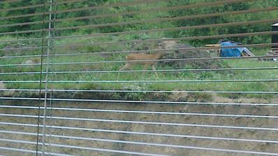 srncek sa pasie rano pred oknom zo spalne
