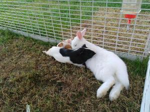 Naštěstí králík je pohodář a na to, že nemá klid, si tak nějak zvykl :-D