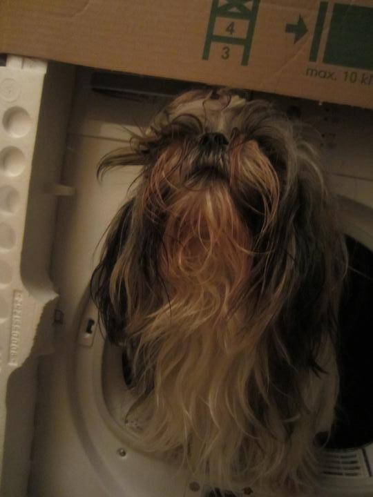 Vybavení-vybráno - Tak sušička je taky dost velká :) Jen by potřebovala, aby jí někdo zapojil. A pes by potřeboval vykoupat, ale nikomu se do toho nechce.