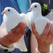 vypustenie svadobných holubičiek...príde na rad po skončení gratulácií
