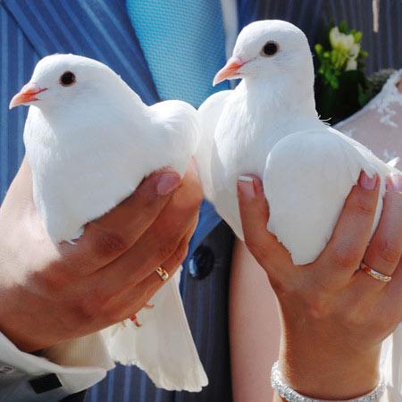 Realizácia mojich detských snov :D - vypustenie svadobných holubičiek...príde na rad po skončení gratulácií