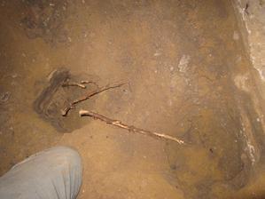 pod betónom sme našli riadne korene