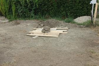 17.9. - vykopali sme poklad :) - našli sme údajne ukradnutú vodovodnú šachtu :)