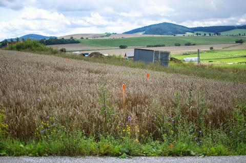 Raciodom - Orientačne vytýčený pozemok a rodinný dom kvôli prvotným zemným prácam