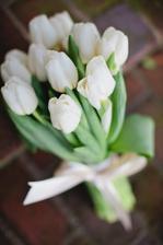 Bílé tulipány jsem si naprosto zamilovala!