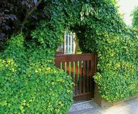 ...brectan ma svoje caro..a urcite si najde miesto v zahrade..:)