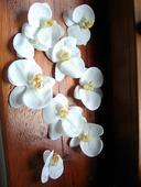 Umělé květy orchideje,