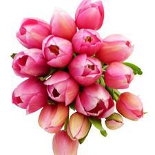 Tulipánky bohužel v červenci nebudou..