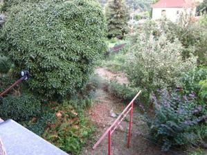 pohled z okna na naši džungli, před domem už je vysekáno
