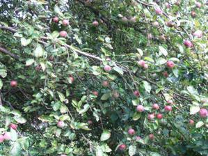 a jabloň je taky obsypaná