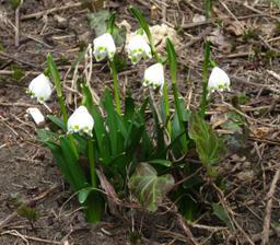 prostě jaro :-)