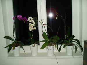 orchidejky se tam krásně vyjímají