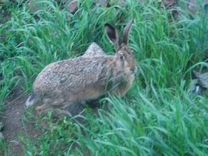 Návštěvník naší zahrady... Když nepřijde on, tak se tu ukážou nejspíš jeho potomci :-D