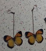Náušnice motýle,