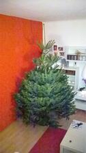 Náš letošní strom před