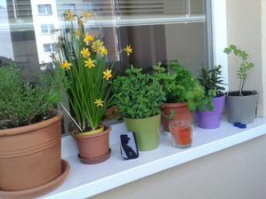 bylinky sa pomaly zviechaju po zime...