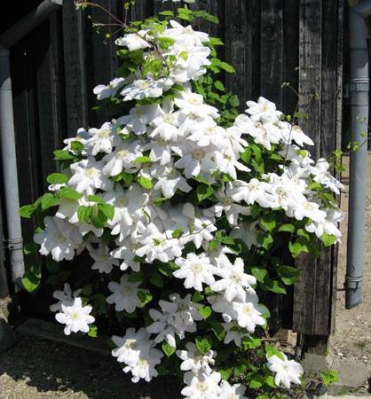 Moja buduca bielo zelena zahrada - Obrázek č. 92