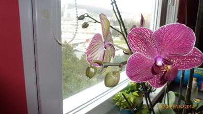 orchidejky zase kvitnu